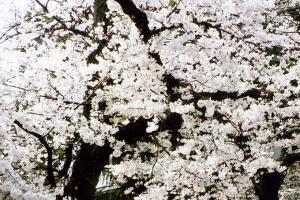 成蹊の春 写蹊会 中村 温氏(政経7回)・吉田尚夫氏(高5回)