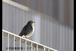 成蹊の野鳥ー2009-エナガなど