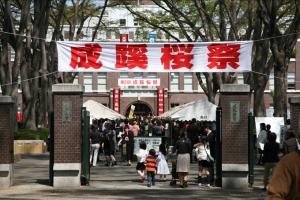 第31回成蹊桜祭1