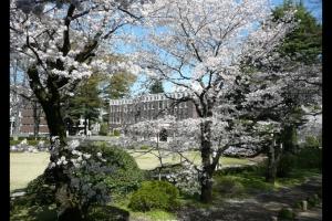 2008成蹊の桜