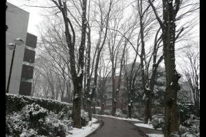 2008雪景色Ⅱ