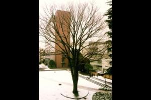 成蹊の冬景色 写蹊会 平形 信氏(政経8回)・竹内カヨ子氏(政経14回)
