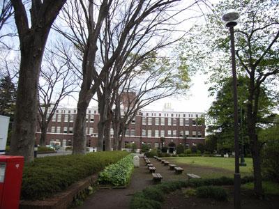 本館前の欅
